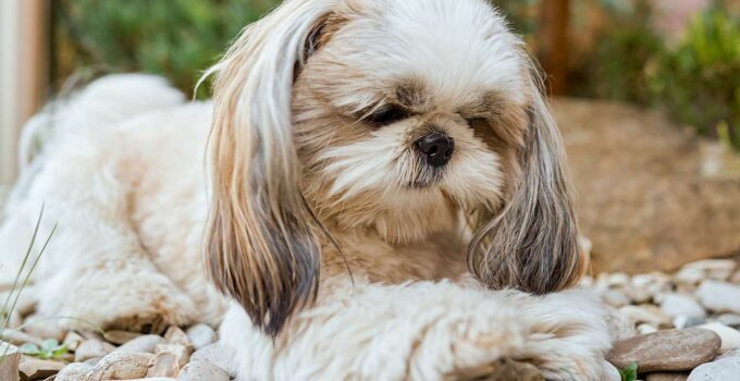 The 5 Best Nail Grinders for Shih Tzu´s